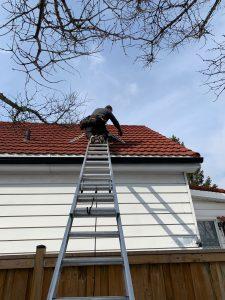 wildlife technician on a roof