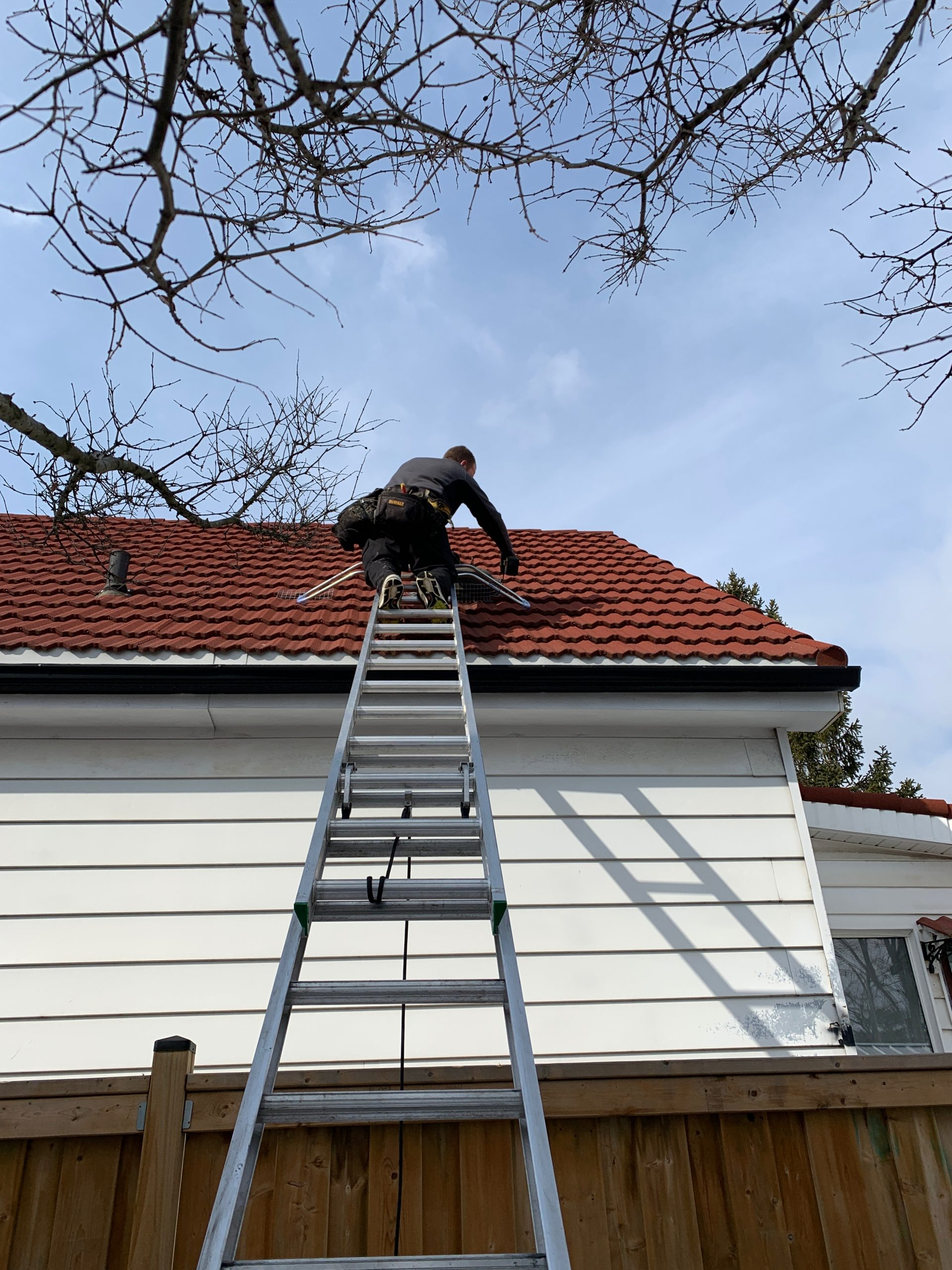wildlife technician on a roof